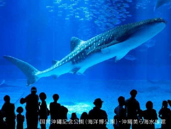 【ファミリー・グループ歓迎】一度は行ってみて♪沖縄美ら海水族館チケット付☆彡(朝食付き)
