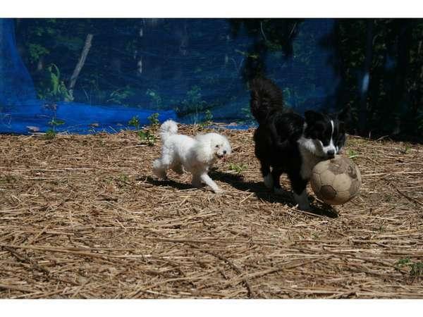 ●6月はとってもお得!会津高原に遅い春がきました♪ペットさんと一緒にのんびり旅行はいかがですか♪