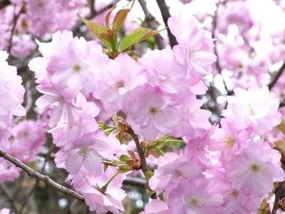 素泊まり 【3月限定】●もうすぐ春ですよ! ウキウキウキプラン!●チェックアウトは9時までです!