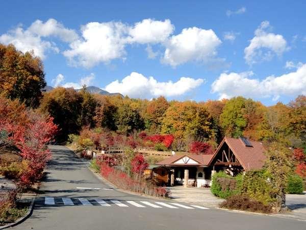 """紅葉の森はまさに""""色彩ワールド""""!標高差があるので長く紅葉が楽しめます♪"""