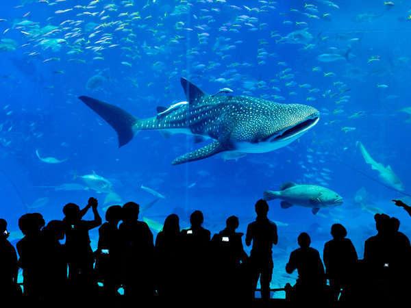 優雅な海の世界へ・沖縄美ら海水族館入場券付きプラン◆Wi-Fi無料