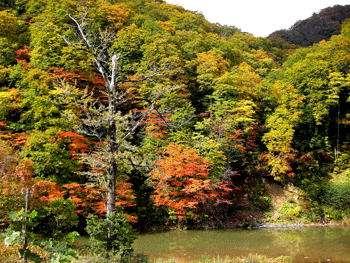 葛根田渓谷紅葉だったらここ!とにかく見事な紅葉です
