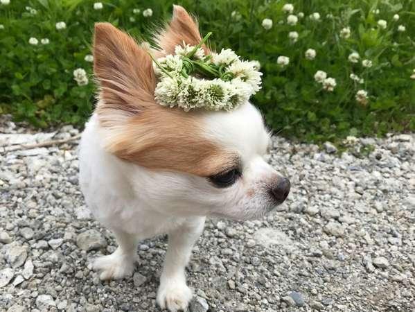 お花のティアラ似合うかしら・・・