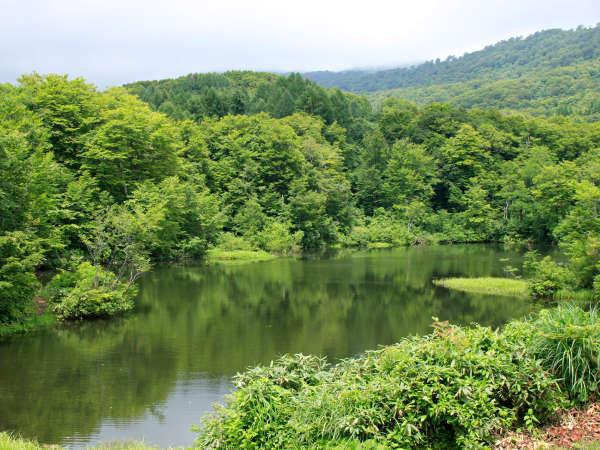 【大自然】宿の直ぐ傍の五色沼。深緑の季節はより一層美しく、エメラルドグリーンに輝きます。