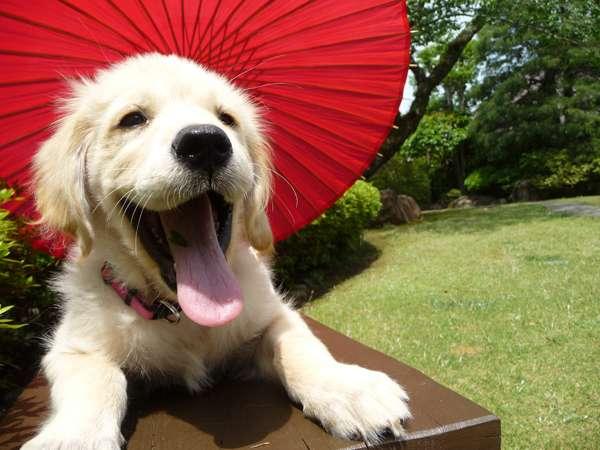 愛犬と泊まれる温泉旅館 修善寺 絆