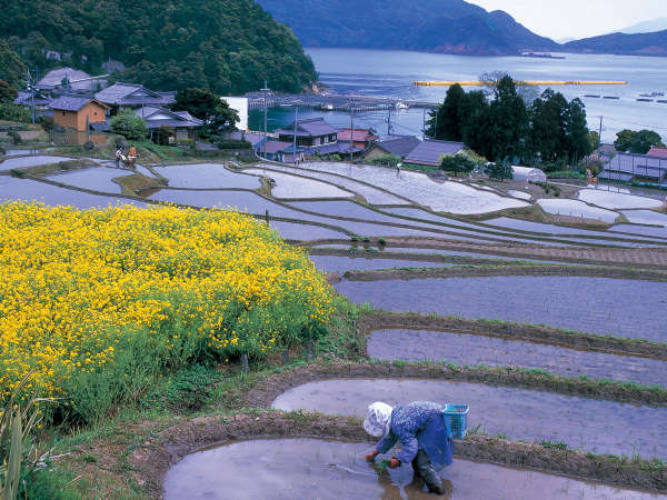 高浜町日引の柳田■日本の柳田百選にも選ばれている。