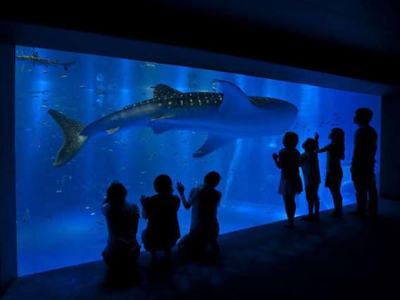 【来て!見て!触れる体験型水族館】海の世界を見に行こう!のとじま水族館入場券付プラン