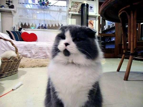 富士山 健康開運温泉猫と小犬の宿 ペンションブルーポピー