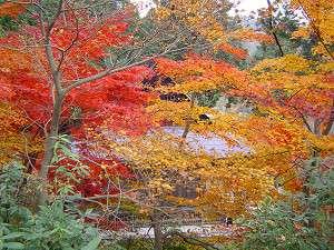 鶏足寺ではきれいな紅葉が楽しめます
