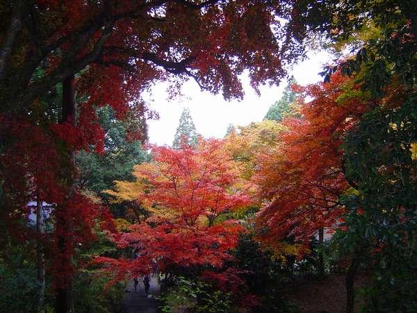 鶏足寺の紅葉 どの角度からでも絵になります。