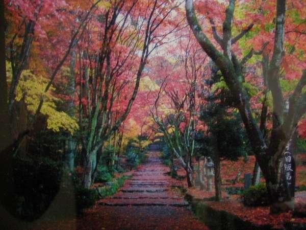 鶏足寺の紅葉 別世界に舞い降りた気分になります。