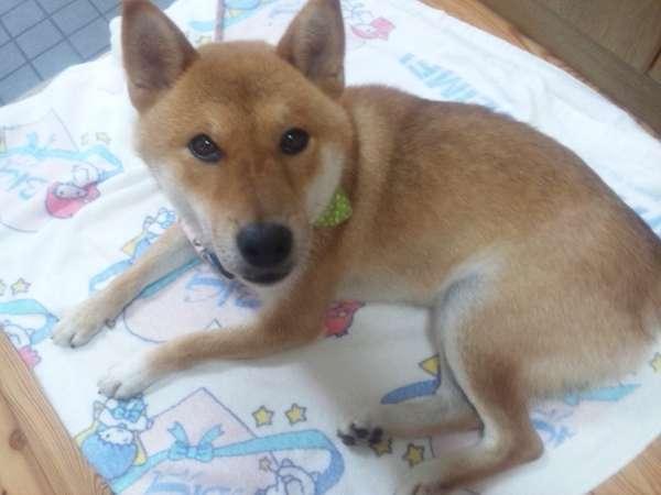 新♪ワンちゃん・ニャンちゃん(犬・猫)同宿プラン♪