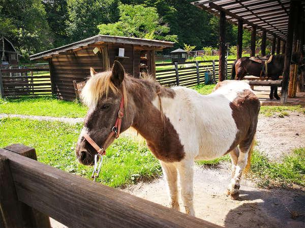 *コート・ドゥ・ヴェール/ポニー牧場では、乗馬体験と動物たちの世話ができます。