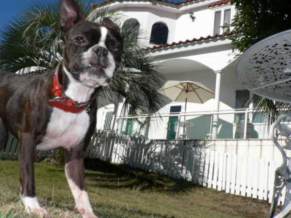押し花アートを楽しめる犬の宿 伊豆高原 ガラスの仔犬の外観