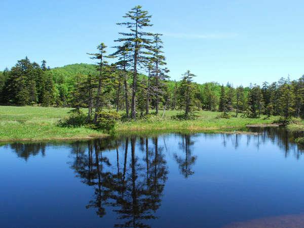 【周辺観光】浮島湿原。大小70余りもの沼が点在。