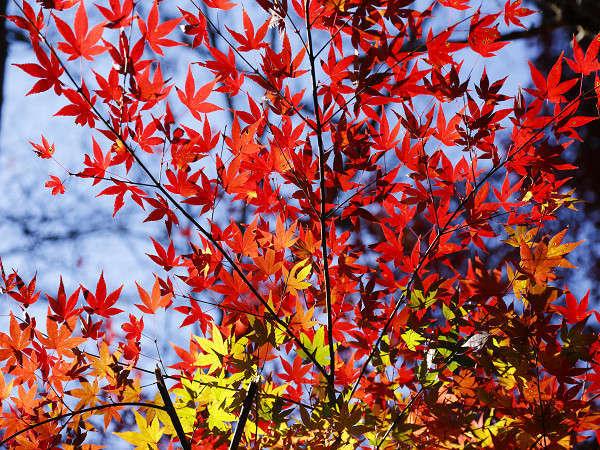 Arima Hot Spring Ryokan Hanamusubi