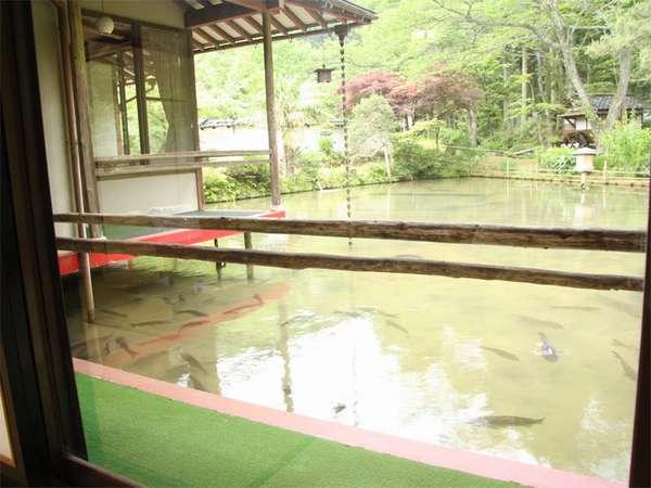 池の上のお部屋からの景色。お部屋から鯉にえさをあげることもできます。