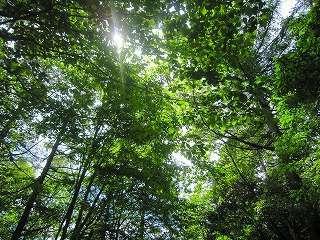 星空露天と木の香りのプチホテル グーテベーレ 関連画像 2枚目 じゃらんnet提供