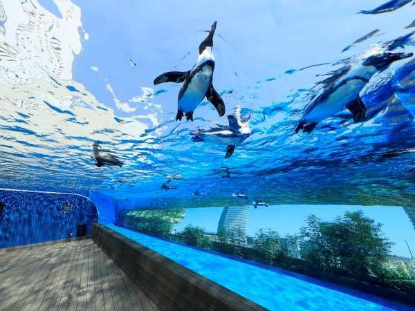 【サンシャイン水族館入場券付】探しに行こう、天空のオアシスへ<朝食付き>