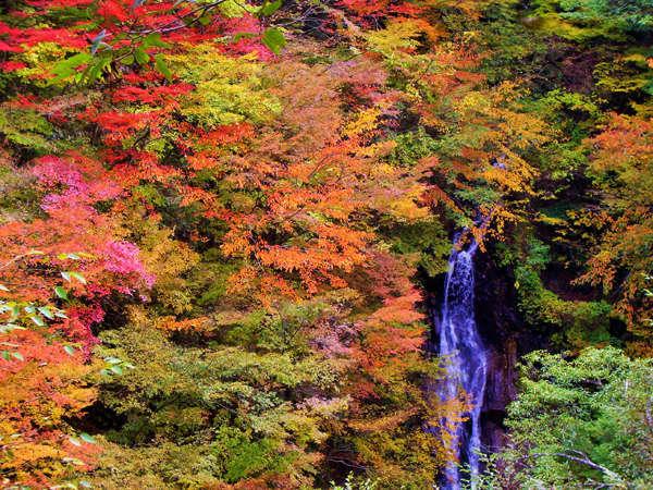 【紅葉・西沢渓谷】11月上旬まで見頃♪渓谷の流れに映るカエデやモミジの紅葉★