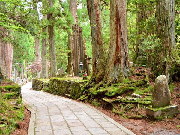 *緑美しいグリーンシーズンの高野山