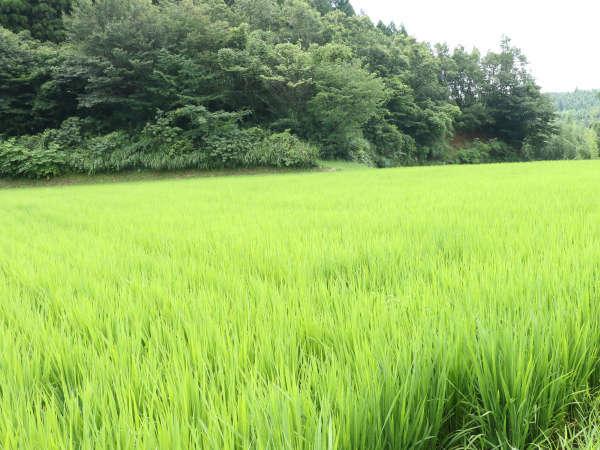 野菜は米は自家栽培のものを使用しております。