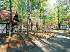 カラマツ林の中に点在する宿泊コテージの外観。コテージは2名~5名様までご利用できます。