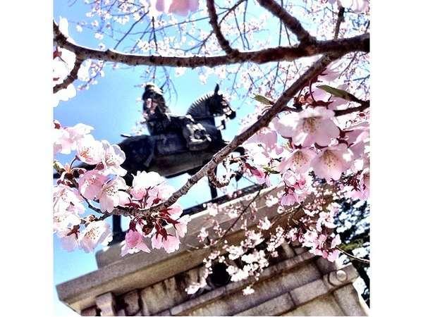 美しすぎる、政宗公騎馬像と桜、もののふです♪