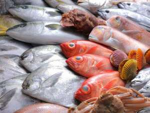 魚ベルジュ自慢の鮮魚をお楽しみください!