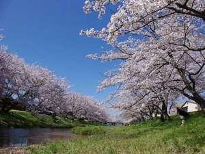 【桜】玉湯川のさくらです。夜にはライトアップも☆(平成22年当館スタッフ撮影)