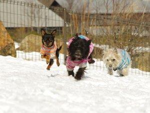 【愛犬用施設】愛犬と一日中遊んでも遊びつくせない愛犬用施設がいっぱいです。