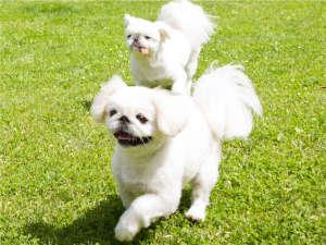 愛犬と一緒に楽しめる施設が満載の複合リゾート!愛犬ともっと仲良くなれるリゾートを目指しています。
