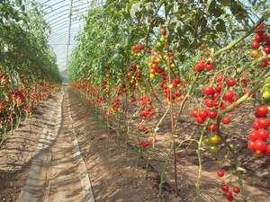 ミニトマトハウス。夏には野菜を摘み取り、自炊可能(日没前まで)。夏休みの思い出にどうぞ☆