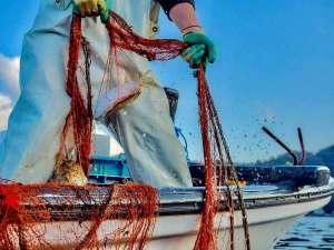 【自ら漁へ】地元ならではの新鮮な海の幸を、館主自ら漁に出てご提供いたします。