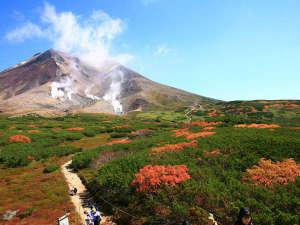 ■秋■日本一早いといわれる旭岳の紅葉