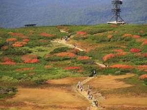 ■秋■日本一早い紅葉に染まる「姿見平」