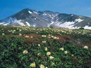 ■春■ようこそ♪北海道最高峰旭岳山麓のリゾートへ