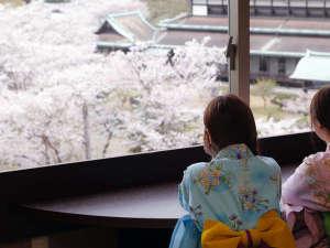 桜の季節はお部屋からお花見(ゆすらん一例) ※3月下旬~4月初旬