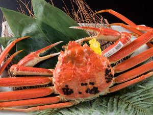 福井の冬の味覚、越前蟹。ぎっしり詰まった身と濃厚な蟹味噌は、一度食べたら忘れられない美味しさ!