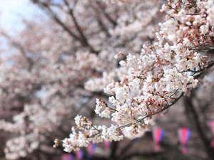 """春の訪れ""""桜観光ツアー"""" ※写真はイメージです"""