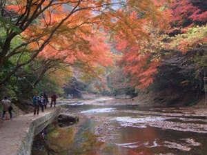 滝巡りの遊歩道にある紅葉