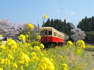 最寄駅の「小湊鉄道」・「いすみ鉄道」は『菜の花』の名スポット