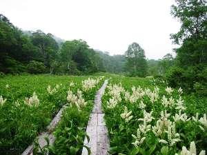 奥利根水源の森の散策をお楽しみください!