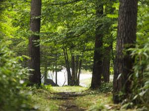 爽やかな高原の緑と風が心地よい敷地内。