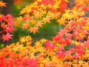 秋の紅葉 安達太良山の身頃は例年10月上旬から中旬です