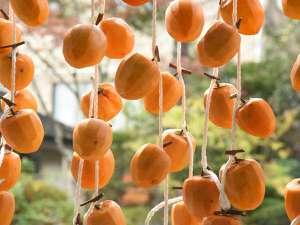 おいしいあんぽ柿になりますように(扇や中庭にて)