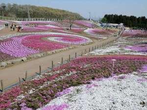 【みさと芝桜公園(高崎市)】春には「織姫が置き忘れた桜色の羽衣」をイメージした3色の芝桜が咲き誇る。