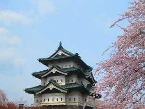 弘前城と桜。当館から車で30分ほどです。