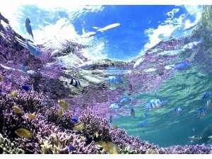 新城(アラグスク)の海