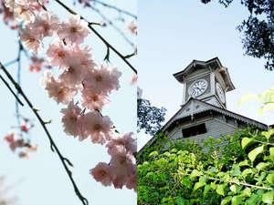 春の札幌を先取り予約!28日前まででお得に♪